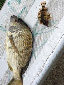 Pêche à Ballina IMG_08601-225x300